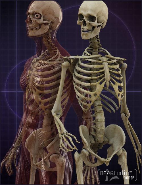 Michael 4 Skeleton by: , 3D Models by Daz 3D