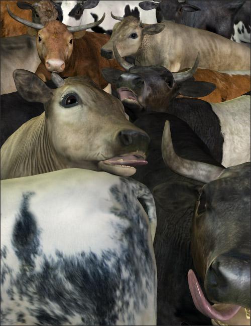 Noggin's Cattle Breeds by: noggin, 3D Models by Daz 3D