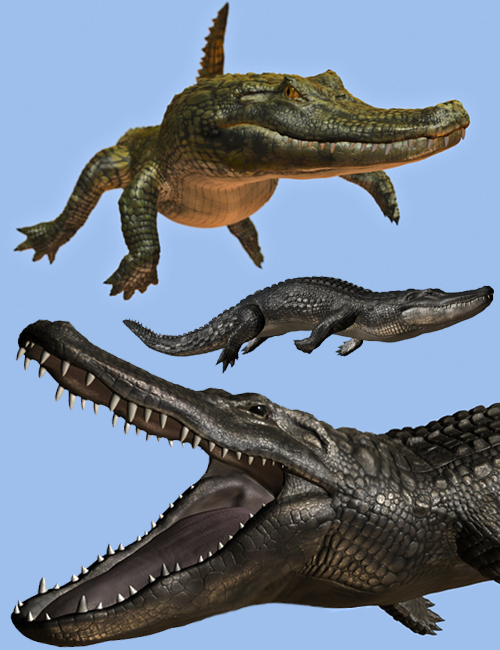 Crocodilia 1 Alligator and Caiman by: Alessandro_AM, 3D Models by Daz 3D
