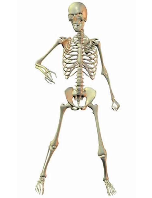 Skeleton by: , 3D Models by Daz 3D