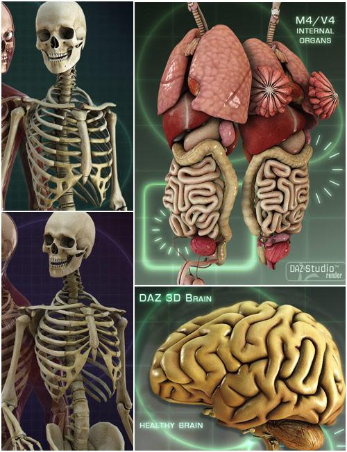 Anatomy Starter Bundle by: , 3D Models by Daz 3D