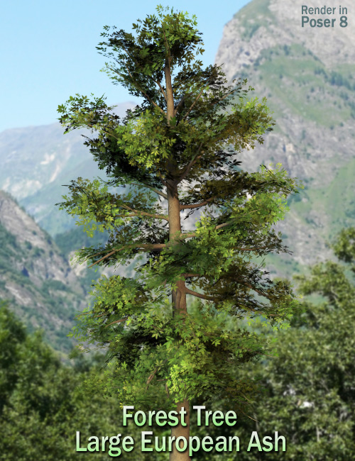 Forest Tree Large European Ash by: Andrey Pestryakov, 3D Models by Daz 3D