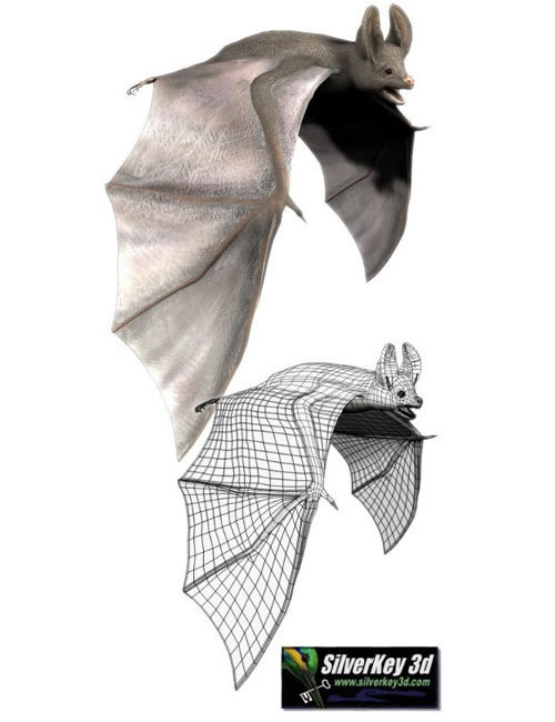 Bat - Silverkey3d by: Debra Ross, 3D Models by Daz 3D