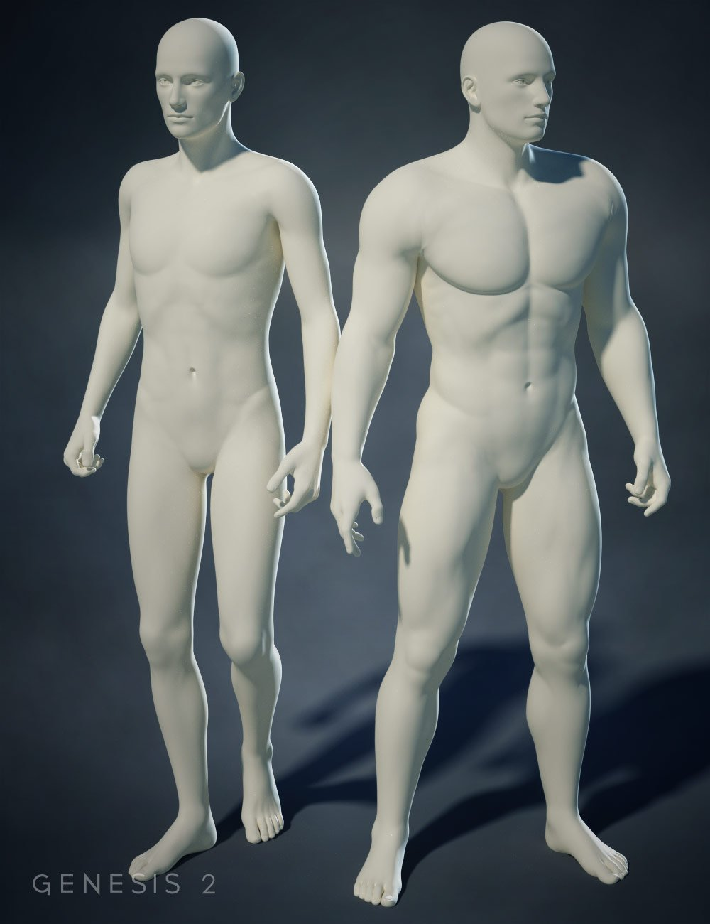 Genesis 2 Male Body Morphs by: , 3D Models by Daz 3D