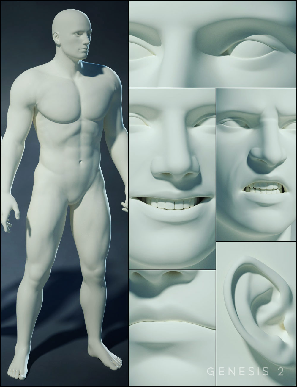 Genesis 2 Male Morphs Bundle by: , 3D Models by Daz 3D