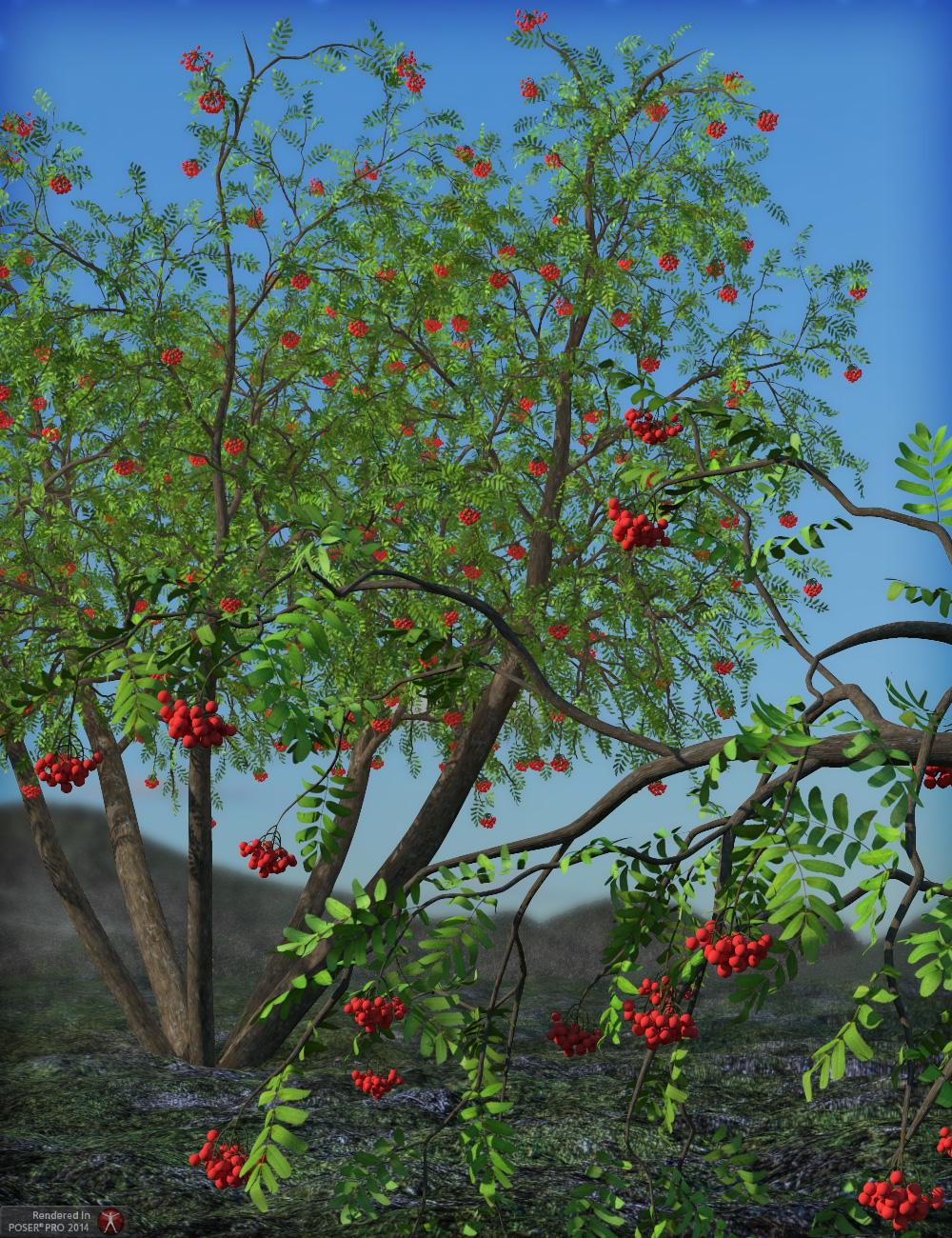 Rowan Trees Megapack by: esha, 3D Models by Daz 3D