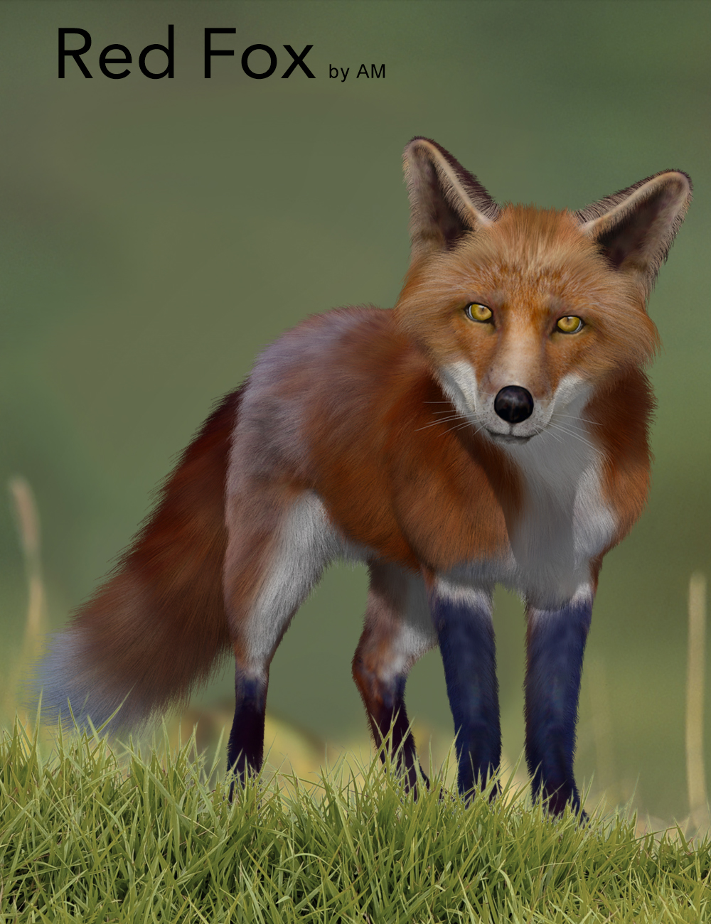 Red Fox by AM by: Alessandro_AM, 3D Models by Daz 3D