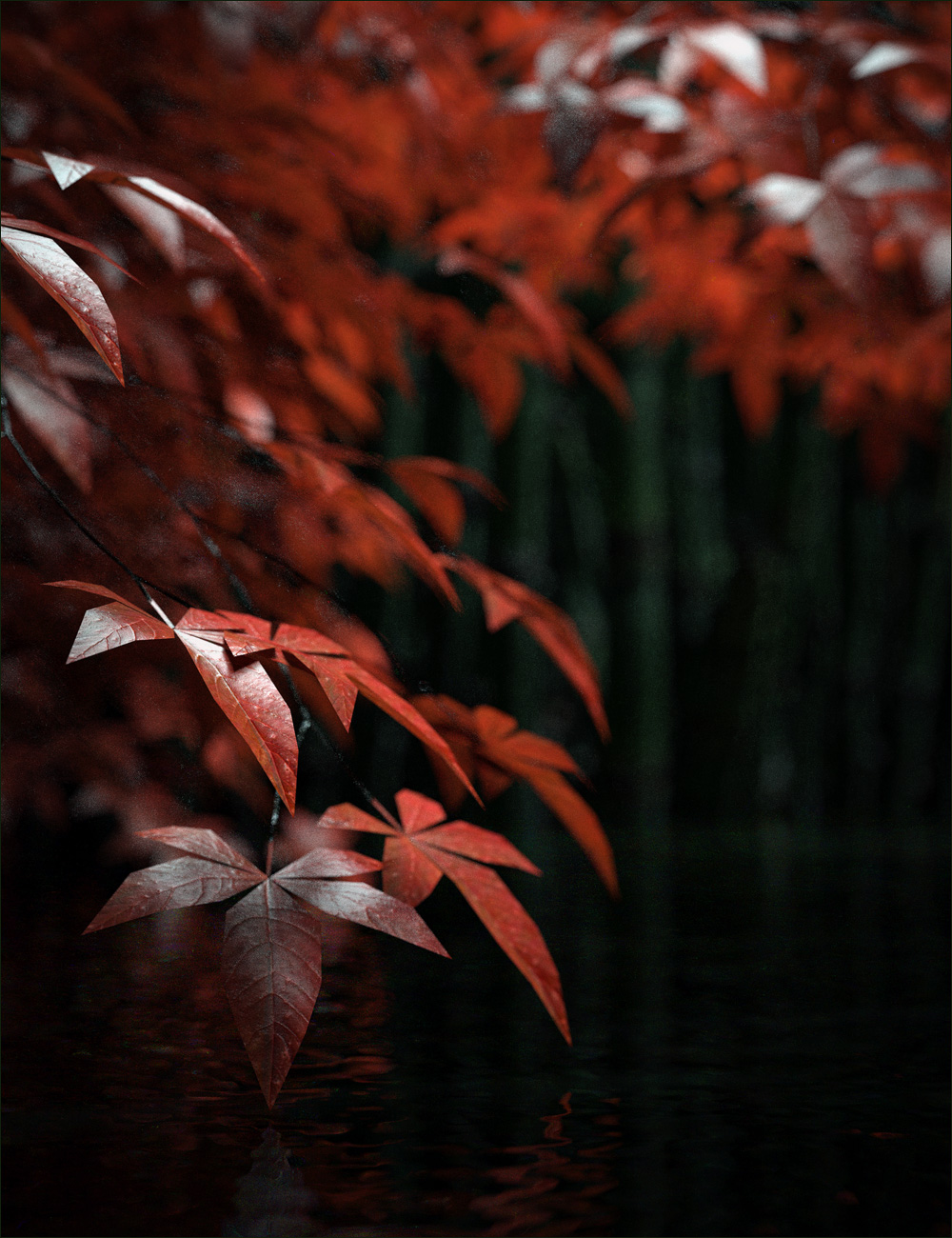 Japanese Maples by: Stonemason, 3D Models by Daz 3D