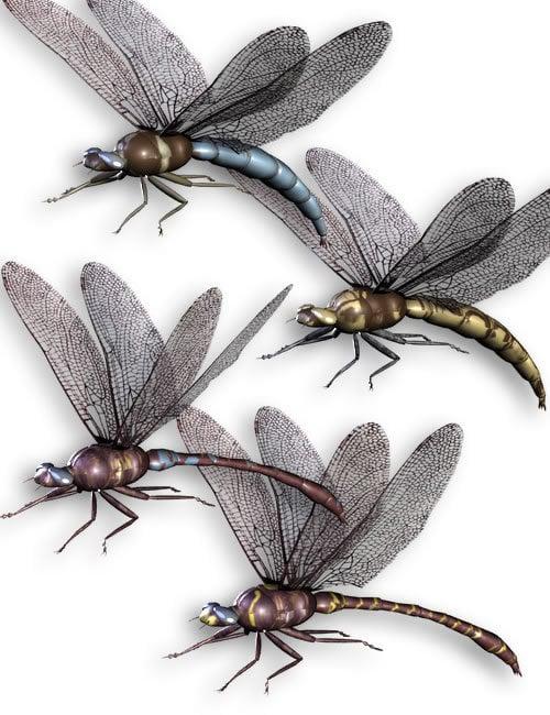 Noggin's Dragonfly by: noggin, 3D Models by Daz 3D