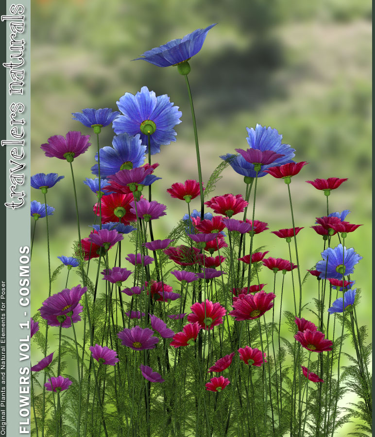 Traveler's Naturals - Flowers Vol 1 - Cosmos by: TravelerRuntimeDNA, 3D Models by Daz 3D