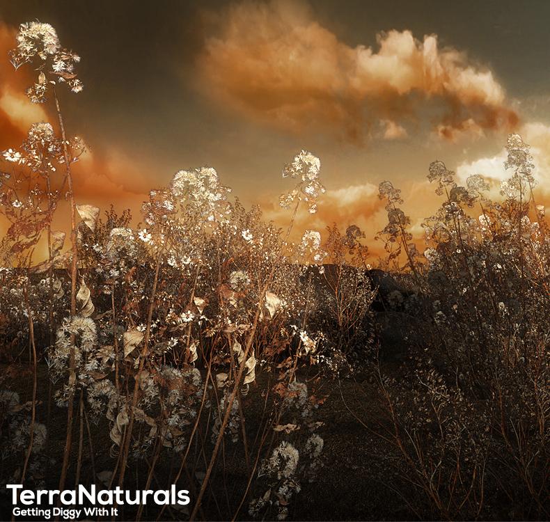 TerraNaturals Volume 1 - Desert by: RuntimeDNASyydTraveler, 3D Models by Daz 3D