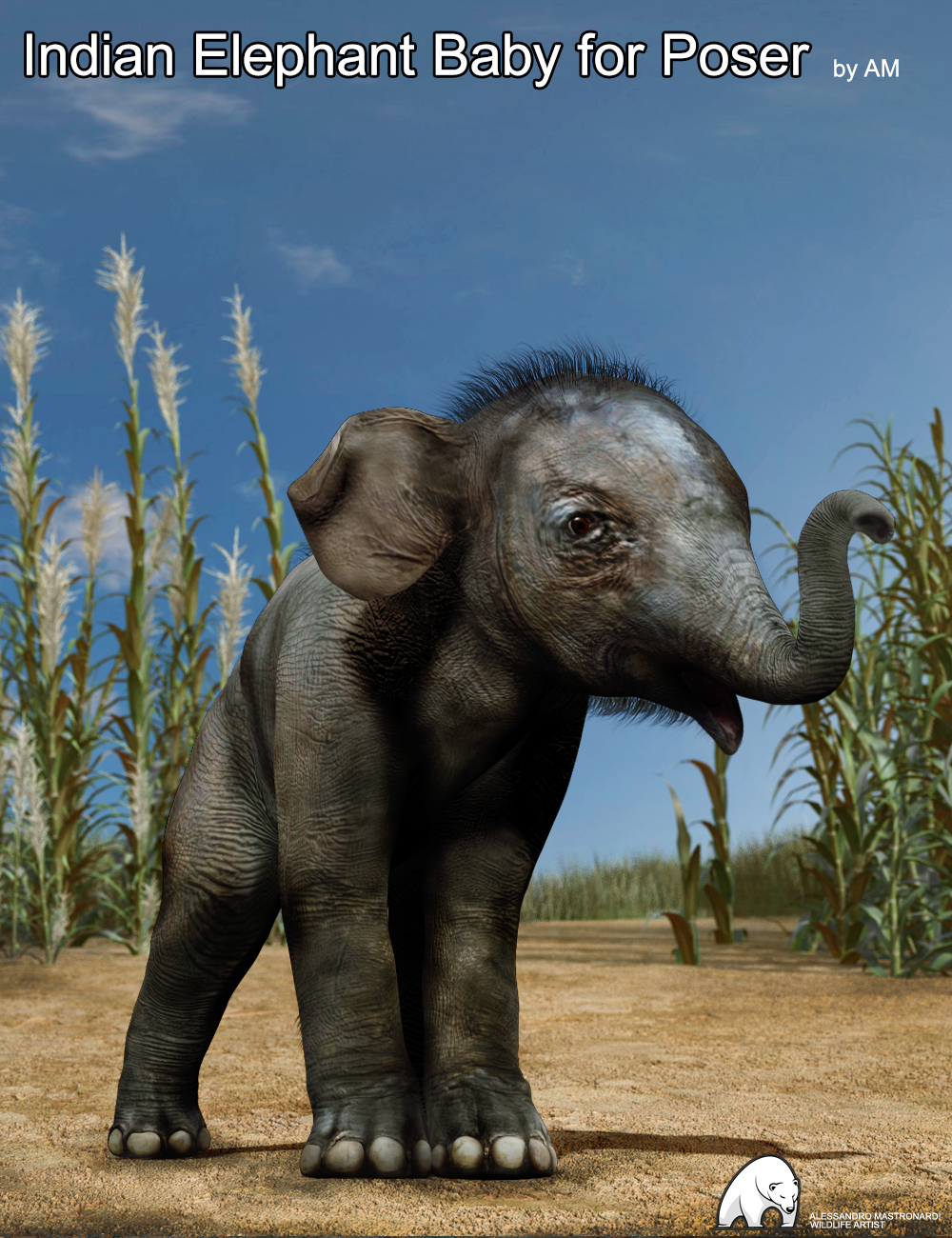 Indian Elephant Baby for Poser by AM by: Alessandro_AM, 3D Models by Daz 3D
