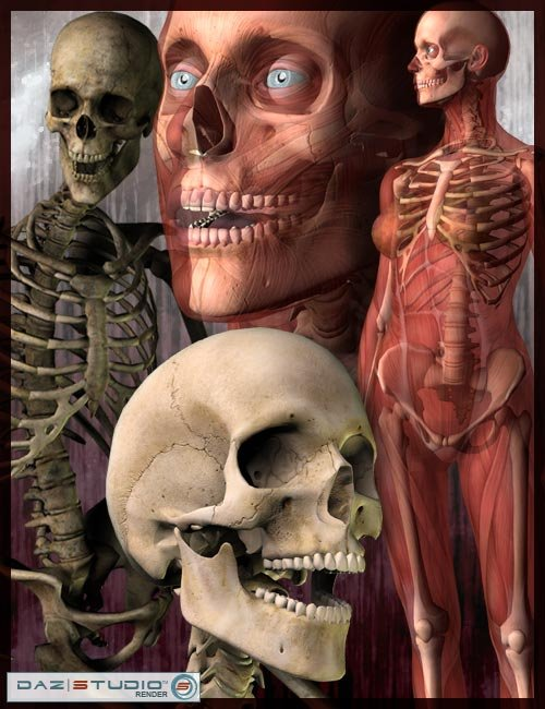 Victoria 3 and Michael 3 Skeletons by: , 3D Models by Daz 3D
