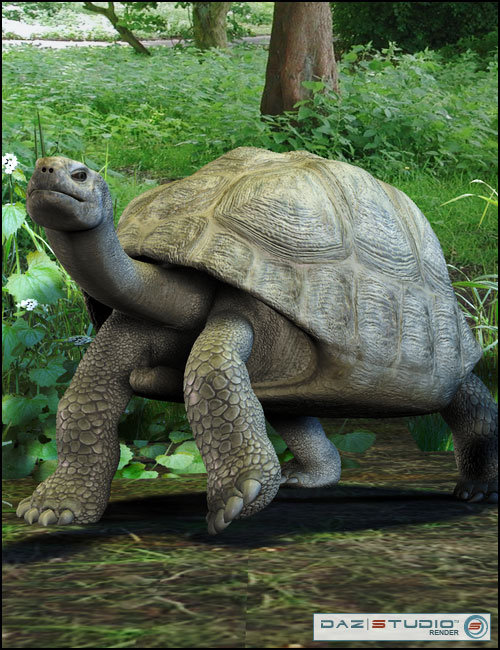 Galapagos Tortoise by: , 3D Models by Daz 3D