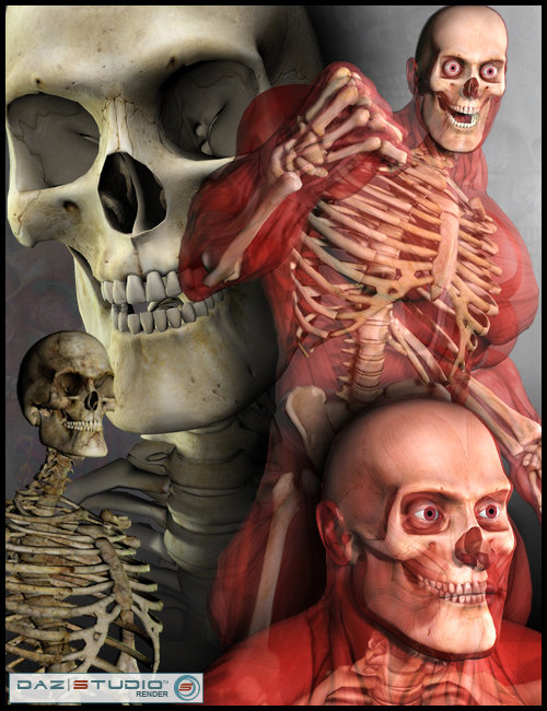Freak 3 Skeleton by: Sequestrian, 3D Models by Daz 3D