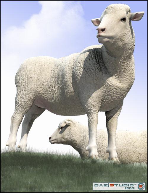 DAZ Sheep by: , 3D Models by Daz 3D