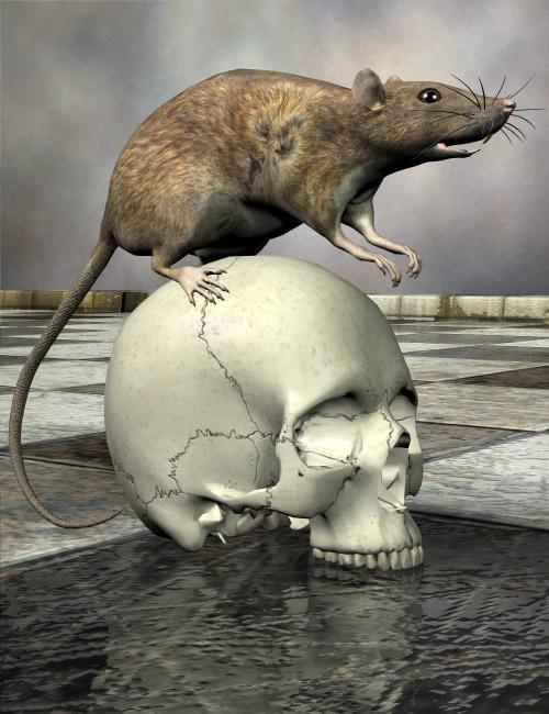 Noggin's Rat by: noggin, 3D Models by Daz 3D