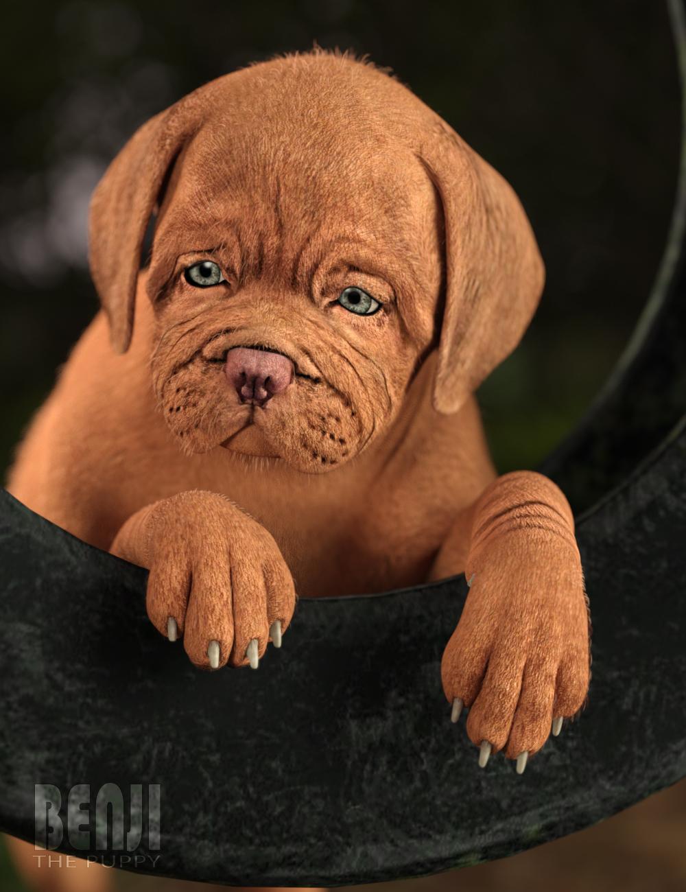 Benji The Puppy HD for Daz Dog 8 by: Deepsea, 3D Models by Daz 3D