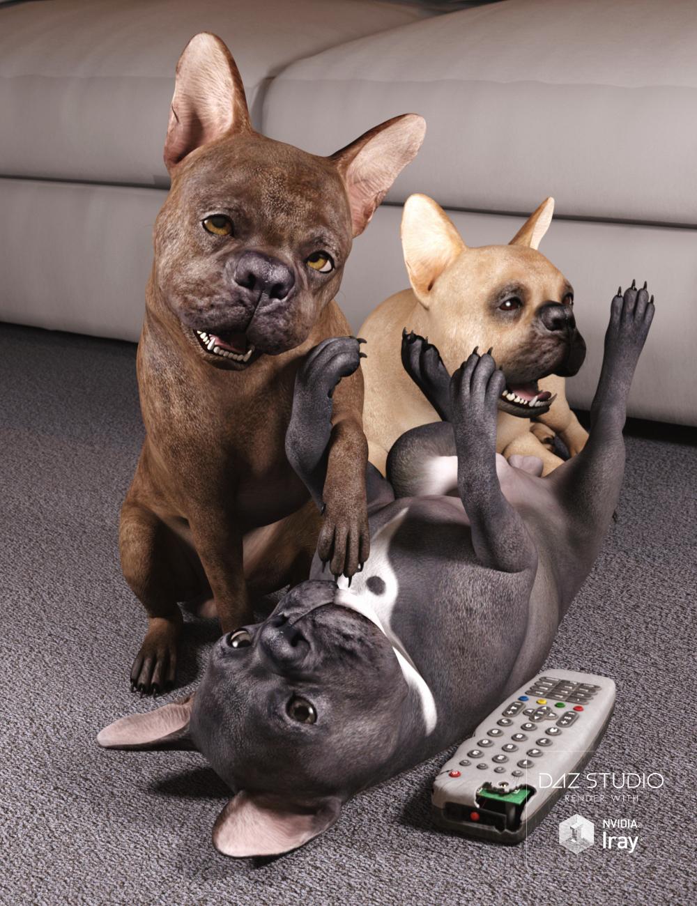 French Bulldog for Daz Dog 8 by: , 3D Models by Daz 3D