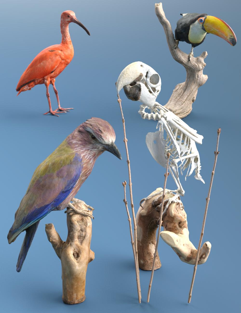 4 Bird Props by: Polygonal Miniatures, 3D Models by Daz 3D