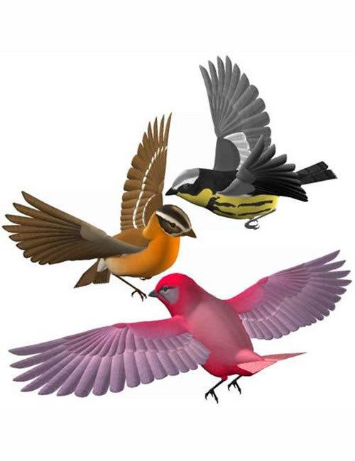 Songbird by: , 3D Models by Daz 3D