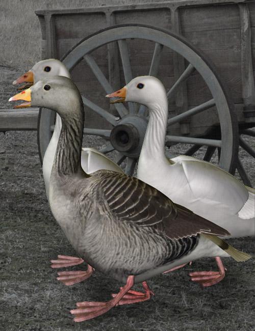 Noggin's Goose by: noggin, 3D Models by Daz 3D