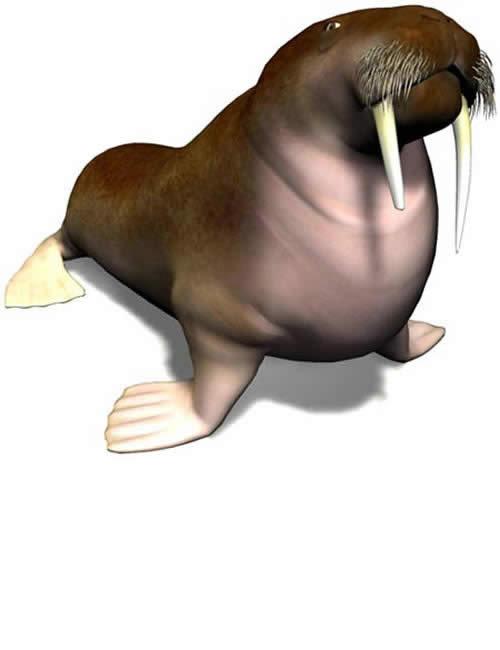 Walrus by: , 3D Models by Daz 3D
