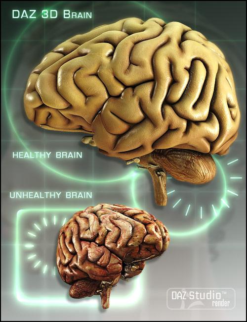 DAZ Brain by: , 3D Models by Daz 3D