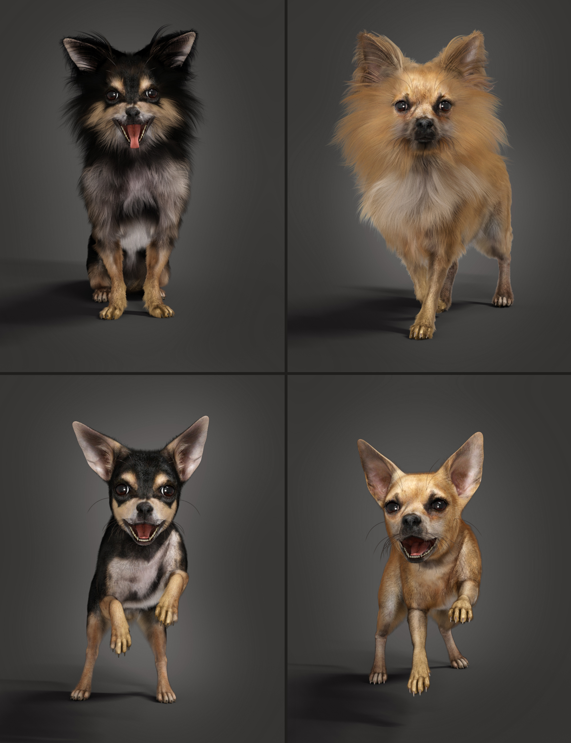 Chihuahua for Daz Dog 8: Penelope and Zorro Add-on by: Alessandro_AMLMX3D, 3D Models by Daz 3D