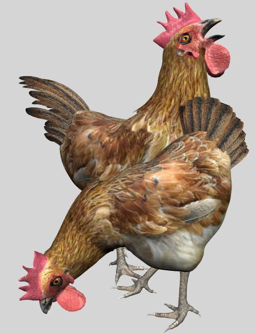 Noggin's Chicken Add On by: noggin, 3D Models by Daz 3D
